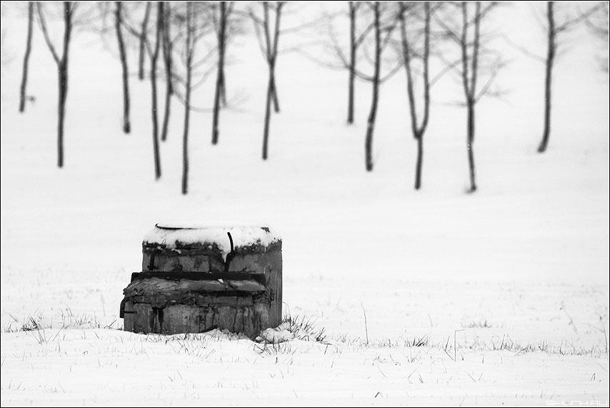 Театр - колодец березы чёрнобелые парк зима снег фото фотосайт