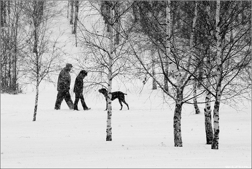Собака - друг человека или долгожданный снег - собака люди дог снег березы чёрно-белый фото фотосайт