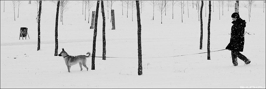 Д.Р.У.Г. - собака друг поводок девочка снег деревья березы зима фото фотосайт