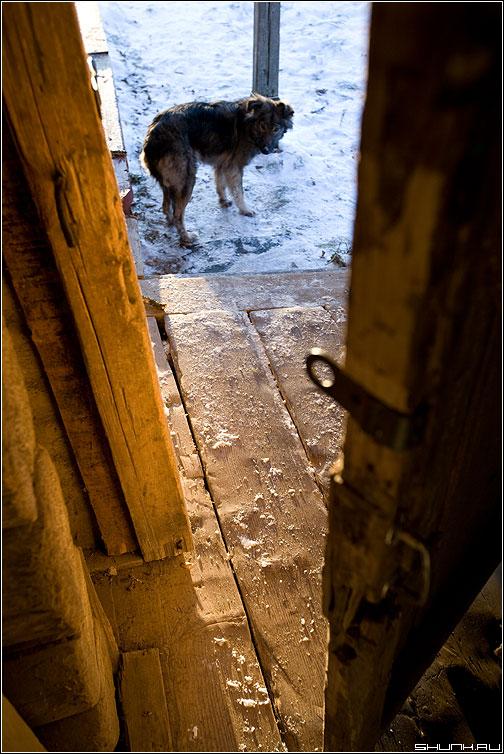 Бездомный пес - собакевич собака деревня лучи солнце зима пес бездомный фото фотосайт