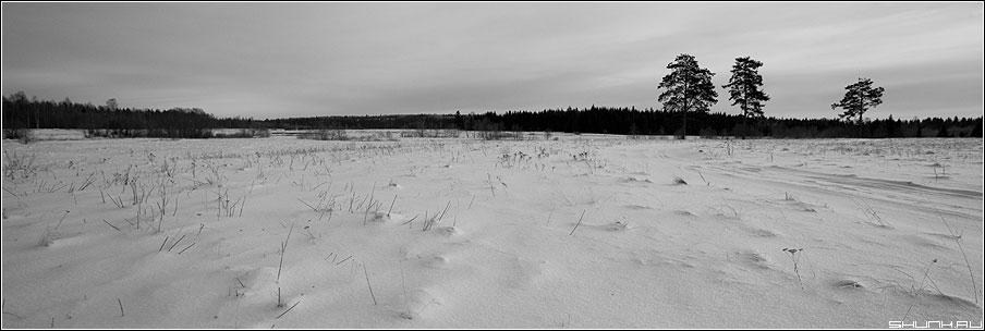 Три тополя на плющихе - деревня зима снег сосны поля таложня новый год фото фотосайт