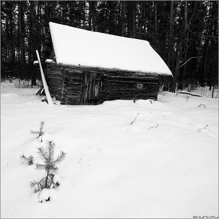 Дом лесника - лес сосны деревня домик снег зима январь морозы елочка сосенка квадрат чёрно-белые фото фотосайт