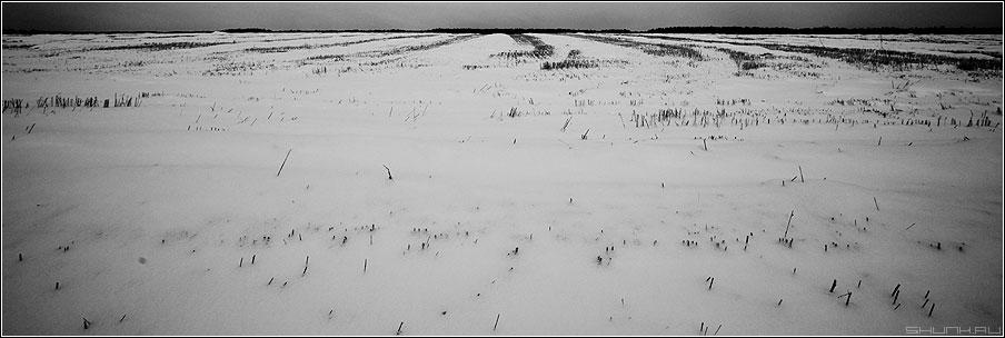 Поля... Поля... - деревня поля скошены зима снег колоски лес 90x30 фото фотосайт
