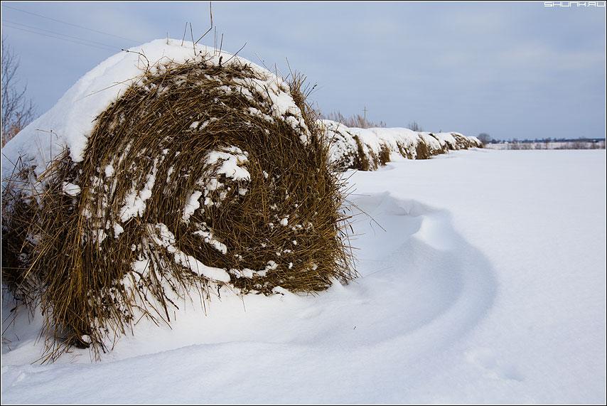 Закружилась зима - зима поле сено закрученное снег январь морозы фото фотосайт