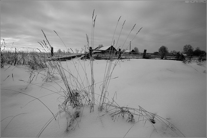 Серый зимний вечер - деревня травинки зима снег серое фото фотосайт