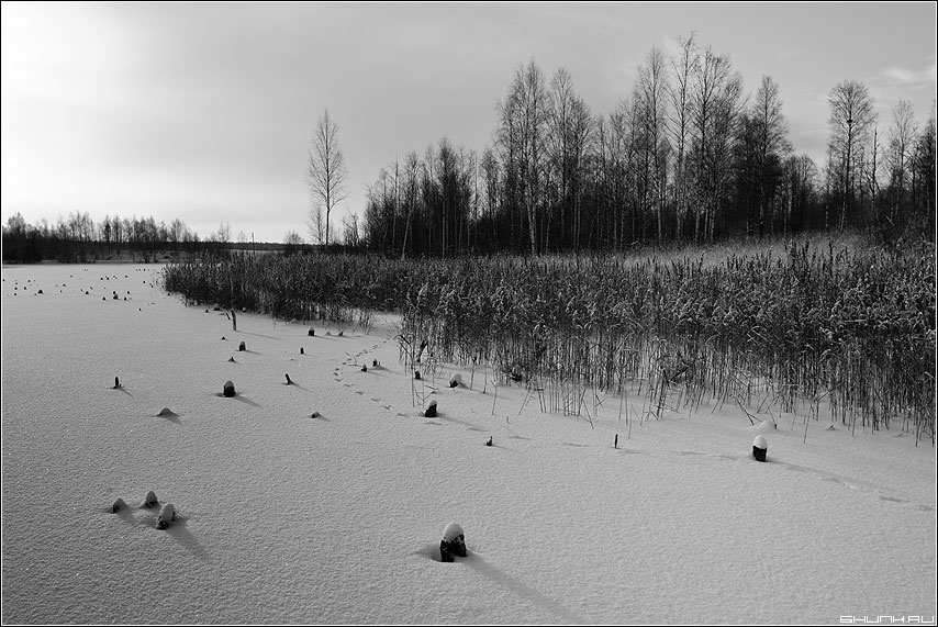 Лисичкина тропинка - снег пруд река лед травинки следы зима пейзаж фото фотосайт