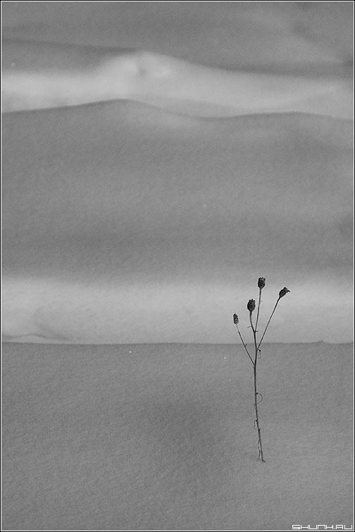 Лаконичность - растение снег травинка цветочек зима фото фотосайт