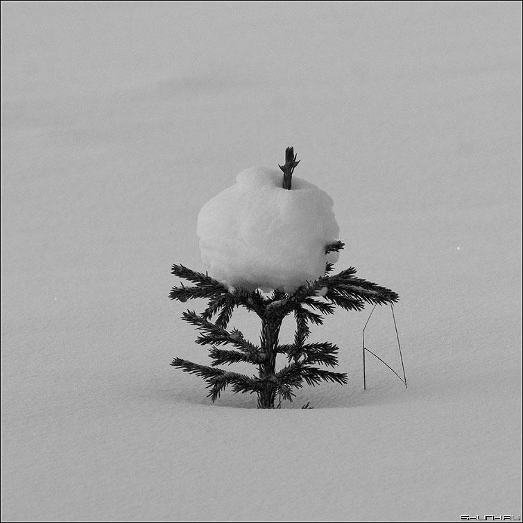 Канапе - елка квадрат поле зима снег чёрно-белая фото фотосайт