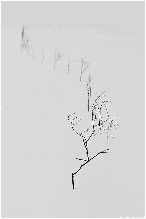 Дорога домой - зима метель веточки тропинка пруд деревня чёрно-белые фото фотосайт