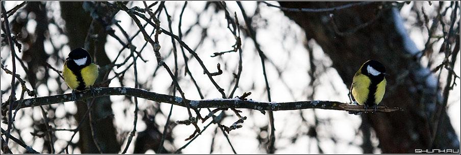 Развод и тапочки по почте... - синички ветка обида птички зима фото фотосайт
