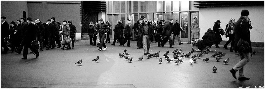 Метро и голуби - люди метро утро голуи чёрнобелые 90x30 фото фотосайт