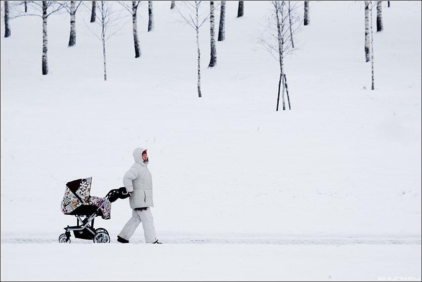 Прогулка - березы парк дорожка коляска мама зима снег композиция 100-400 фото фотосайт