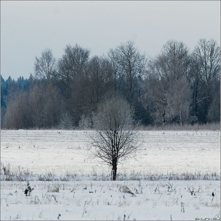Один в поле не воин - квадрат дерево лес голубой зима снег поле фото фотосайт