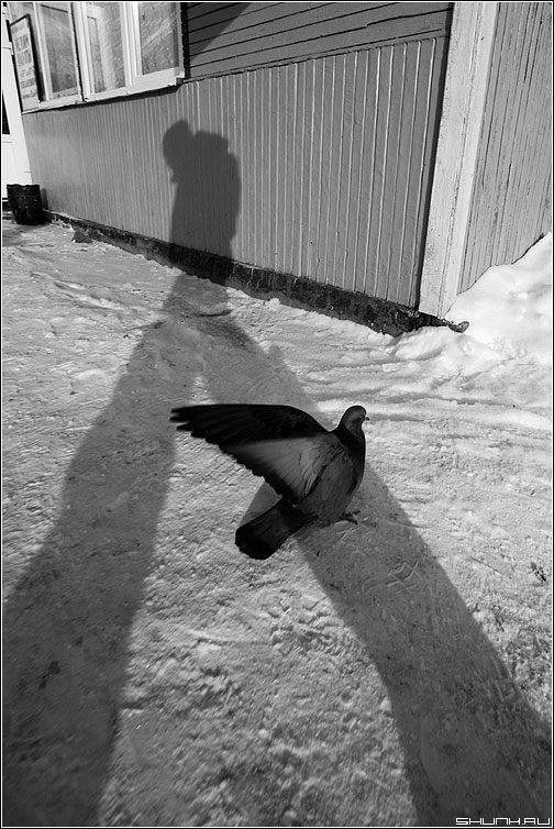 По дороге на поезд - вокзал карелия медвежьегорск медвежка чёрно-белое голубь фото фотосайт