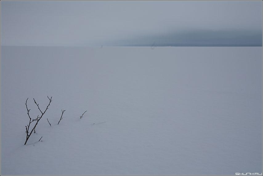 Веточка - карелия озеро медвежьегорск зима фото фотосайт