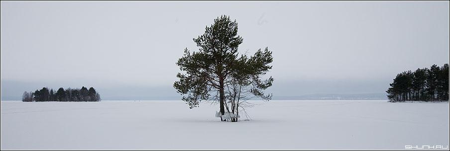 Симметрия - антисимметрия - карелия островок дерево сосна вид зима снег 90x30 фото фотосайт