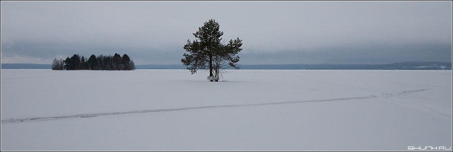 Один из видов - сосна остров карелия лыжня лед снег зима природа фото фотосайт