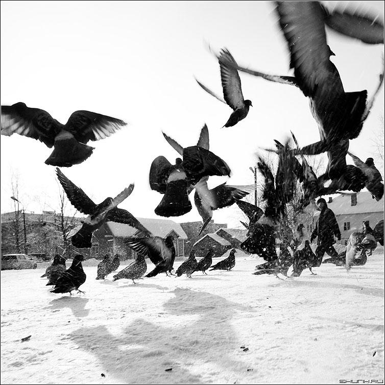 Мужик и голуби - квадрат чёрно-белое улица карелия медвежьегорск фото фотосайт