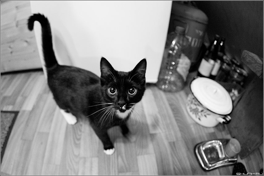 Ми ми миска молока - кот кошка чёрно-белая фото фотосайт