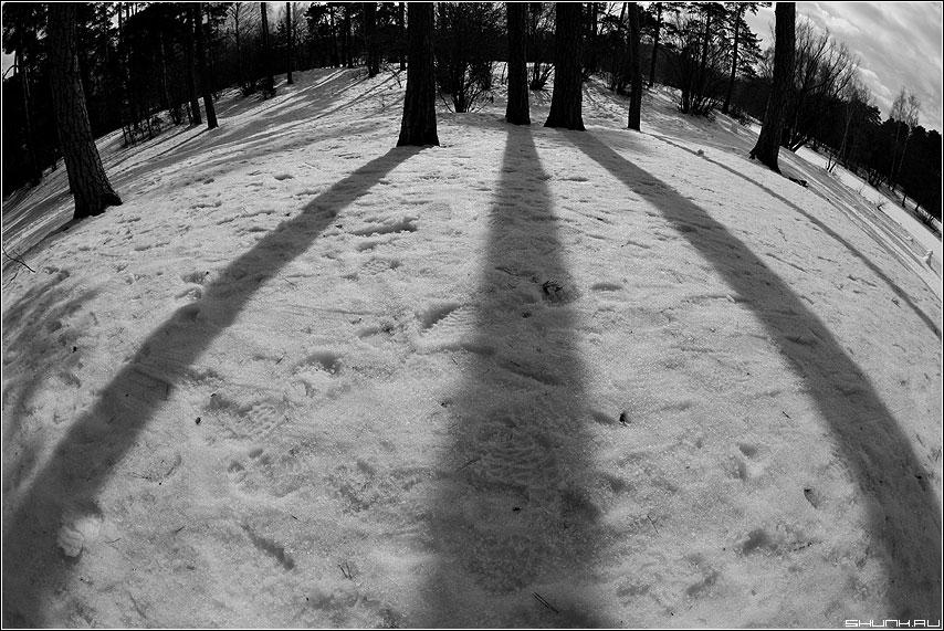 Искаженные тени - тени фишай серебряный бор сосны весна снег фото фотосайт