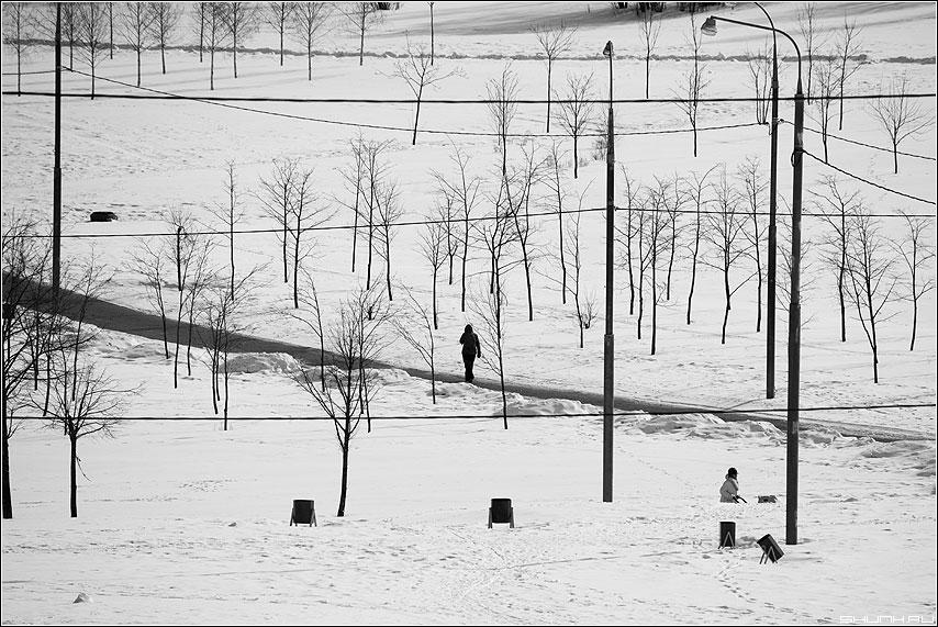 Хаос - снег деревья люди чёрно-белые фото фотосайт