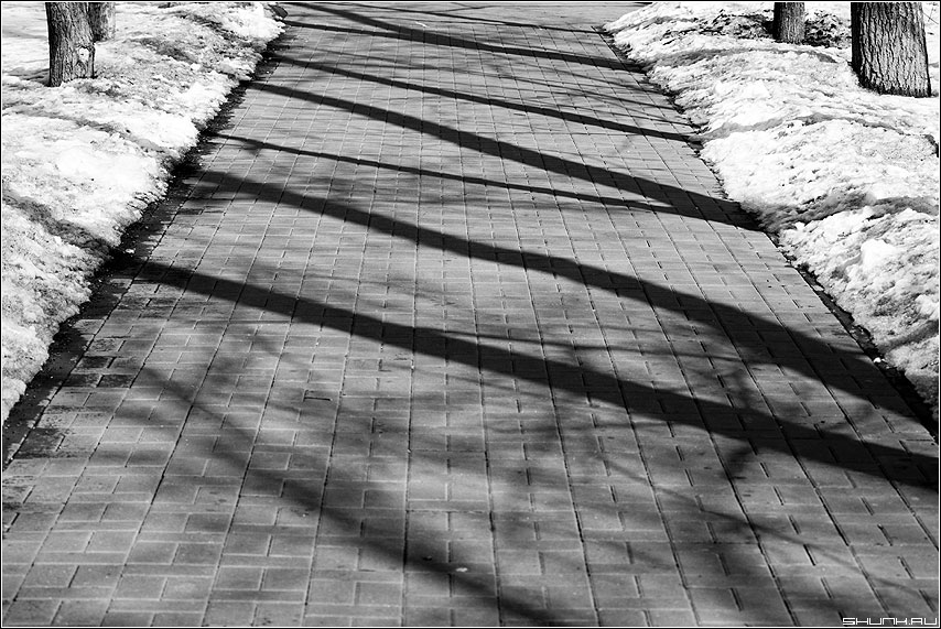 Дорожные тени - тени парк дорожка весна первое солнце чёрно-белые фото фотосайт