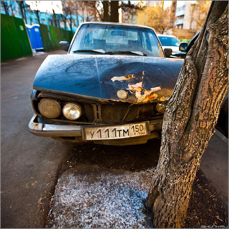 Приехали - бмв дерево квадрат цвет поднятые цвета авто фото фотосайт