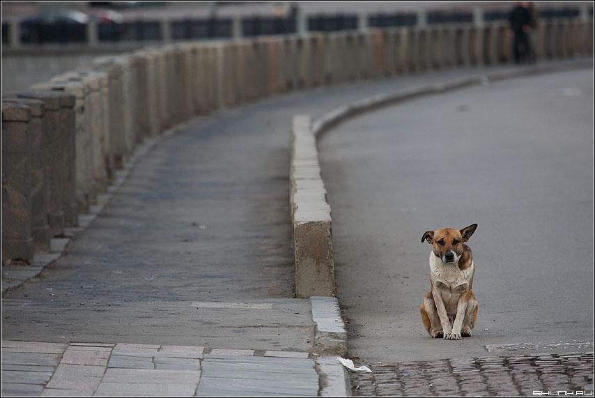 Лонели - собака набережная одиночество грусть фото фотосайт