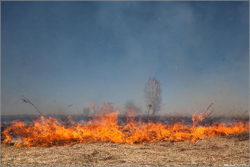 Травосжение - сухая трава огонь весна май первомай деревня фото фотосайт
