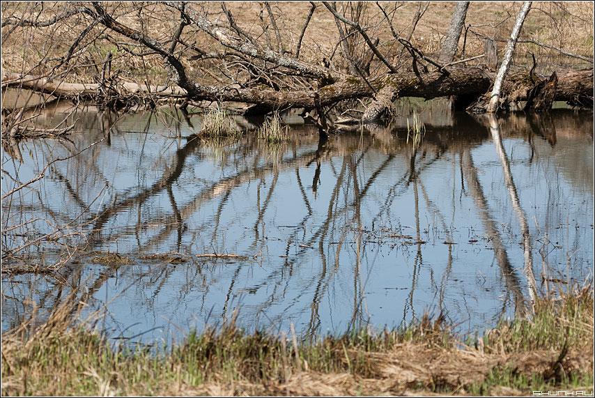 Коряго - коряга весна река берега трава фото фотосайт