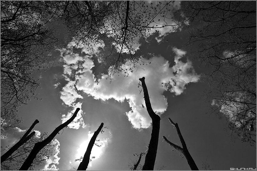 Облако на палочках - облако чёрнобелая деревья небо парк весна фото фотосайт