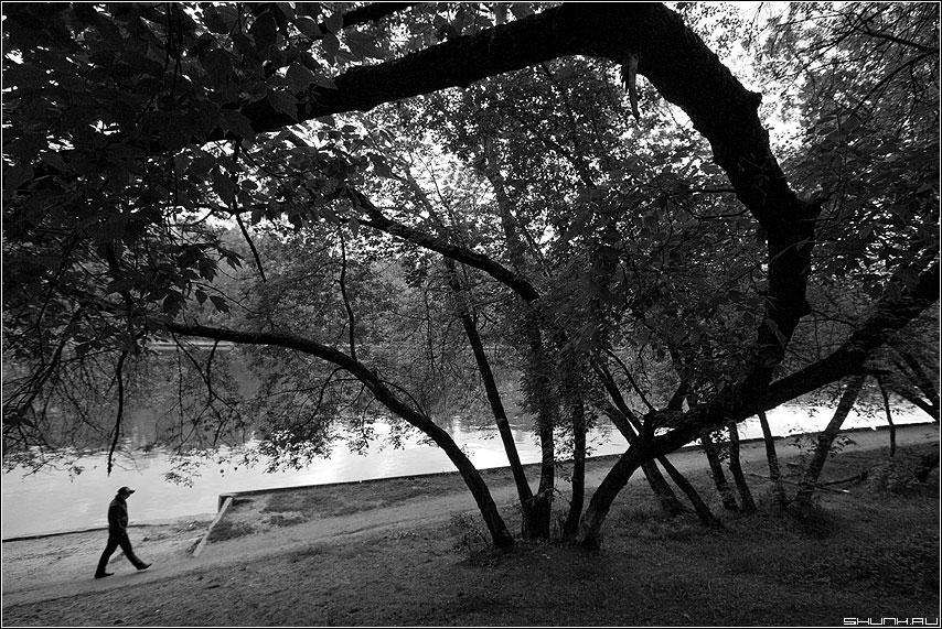 Про тернистый жизненый путь - деревья парк мужик человек шаг чёрнобелая фото фотосайт