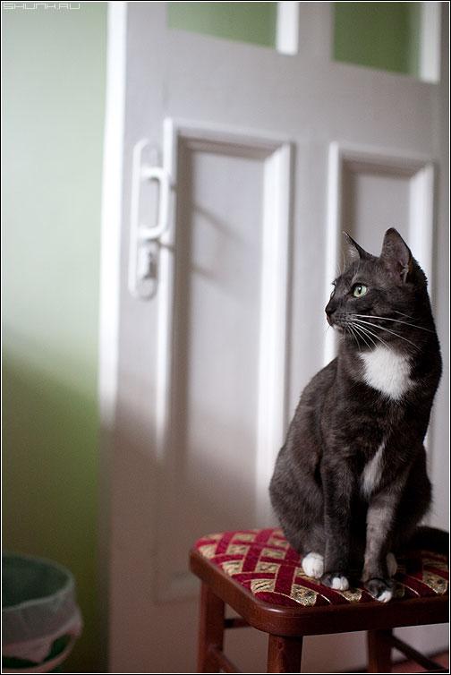 Без названия - кошка стул дверь ручка свет фото фотосайт