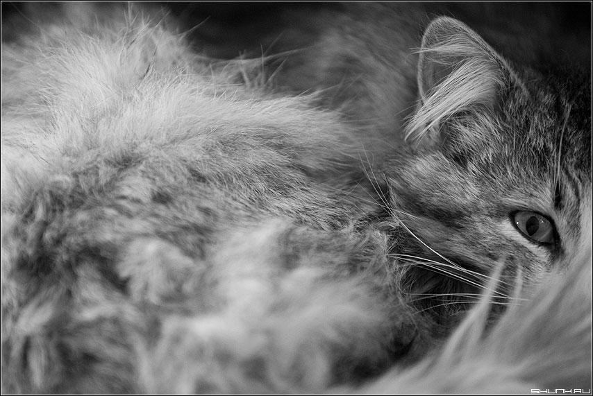 Животное - кот глаз шерсть яёрнобелое ухо взгляд фото фотосайт