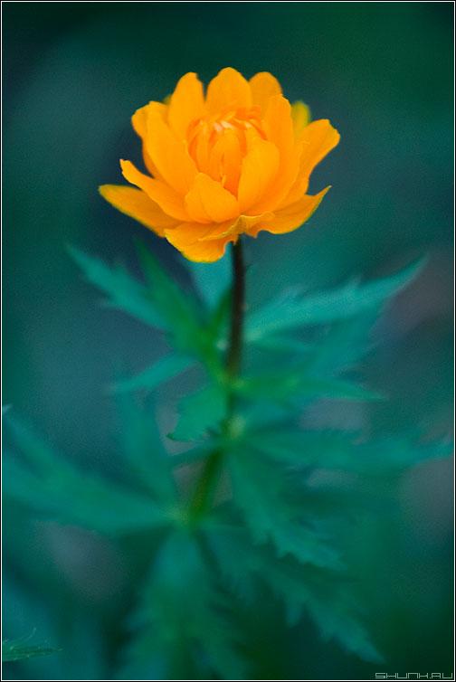 Цветастый цветок - цветок листья цвет сад огород фото фотосайт