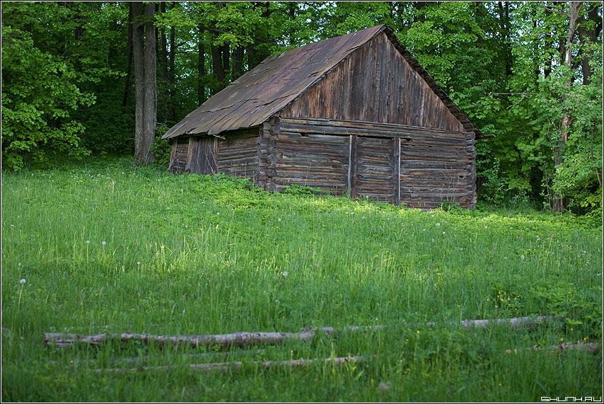 Старый сарай - деревня весна зелень бревна лес фото фотосайт