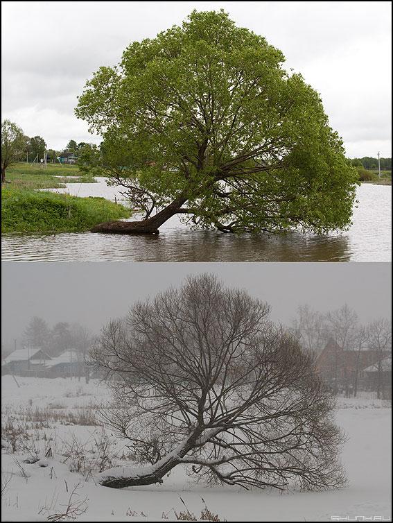 Зимой и летом разным цветом - дерево деревня времена года фото фотосайт