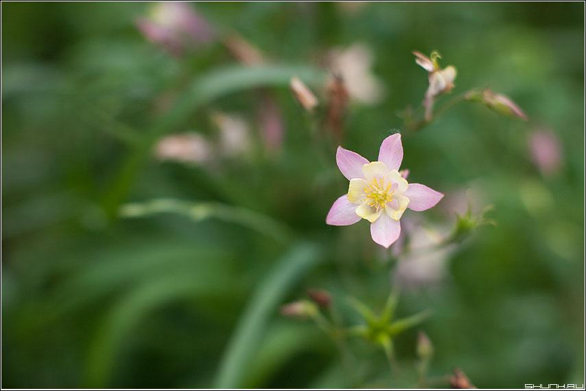 Без названия - цветочек сад огород полисад 50mm фото фотосайт