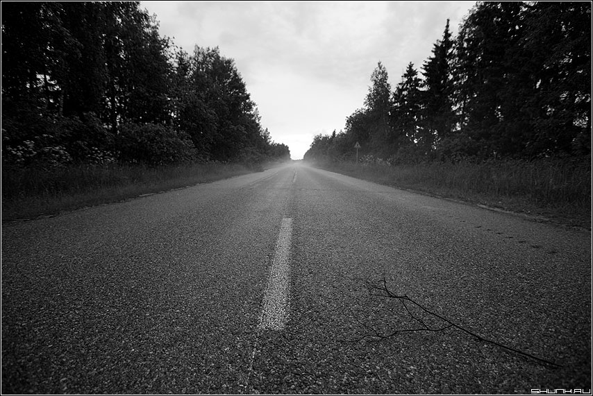 Дождливо вечерняя дорога - дорога веточка чёрнобелые разметка деревня фото фотосайт