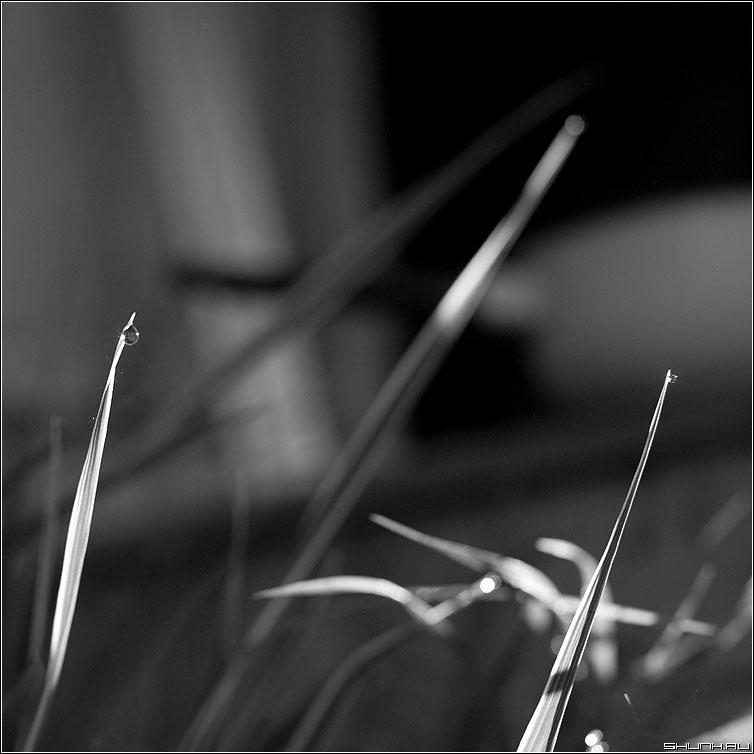 Про капельки - капельки травинки квадратное чёрнобелое фото фотосайт