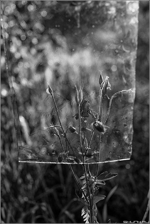 Новый взгляд на цветочек - уветочек стекло капельки вода чёрнобелое элемент фото фотосайт