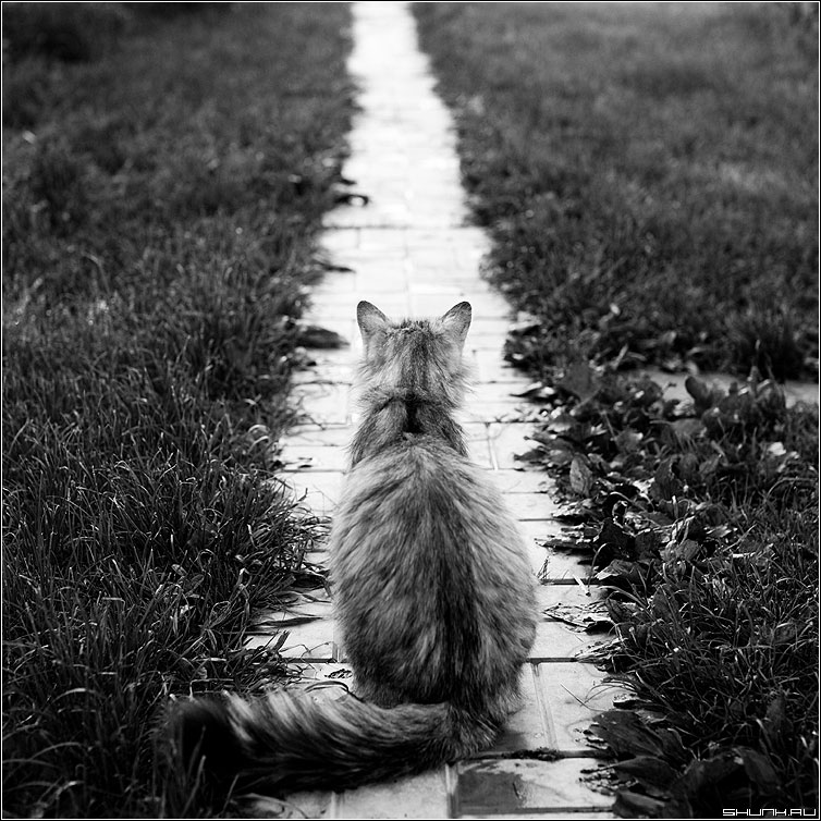 ЖДАТЬ - кот тропинка деревня квадратное чёрнобелое ждать фото фотосайт
