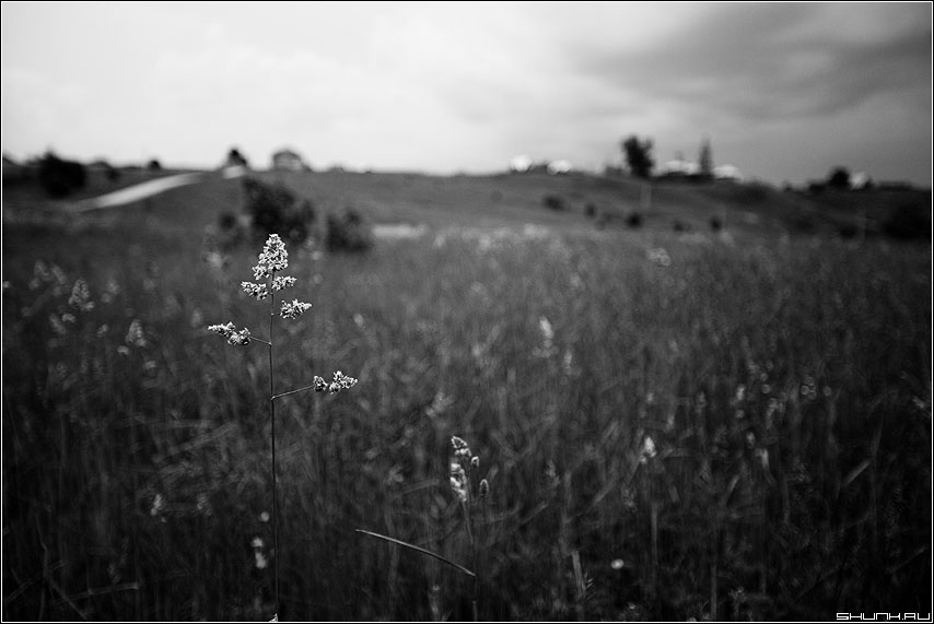 Тоскливое лето - лето тоска травинка вышгород церковь холм чёрное чёрнобелое фото фотосайт