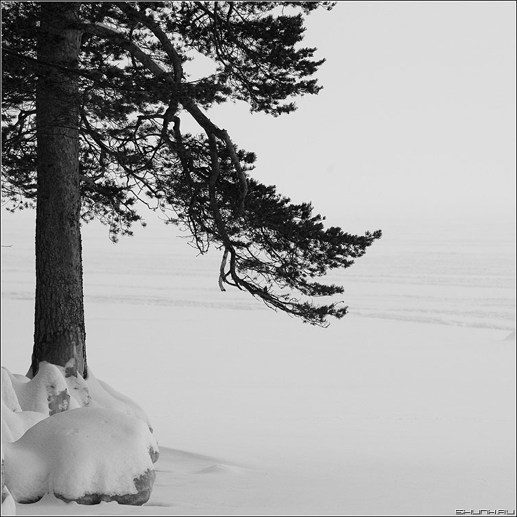 Убережкареки - лед снег зима карелия квадратное ветки сосна фото фотосайт