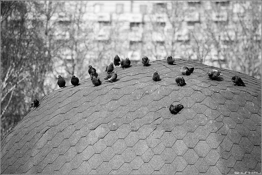 Теорема Варшавского о граничной гладкости конформного отображения круга на ограниченную область с гладкой жордановой границей. - голуби крыша теорема элементы весна фото фотосайт
