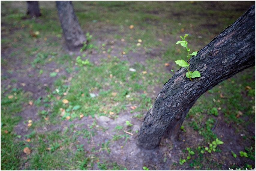 Росток - дерево веточка парк тяга 2.8 фото фотосайт