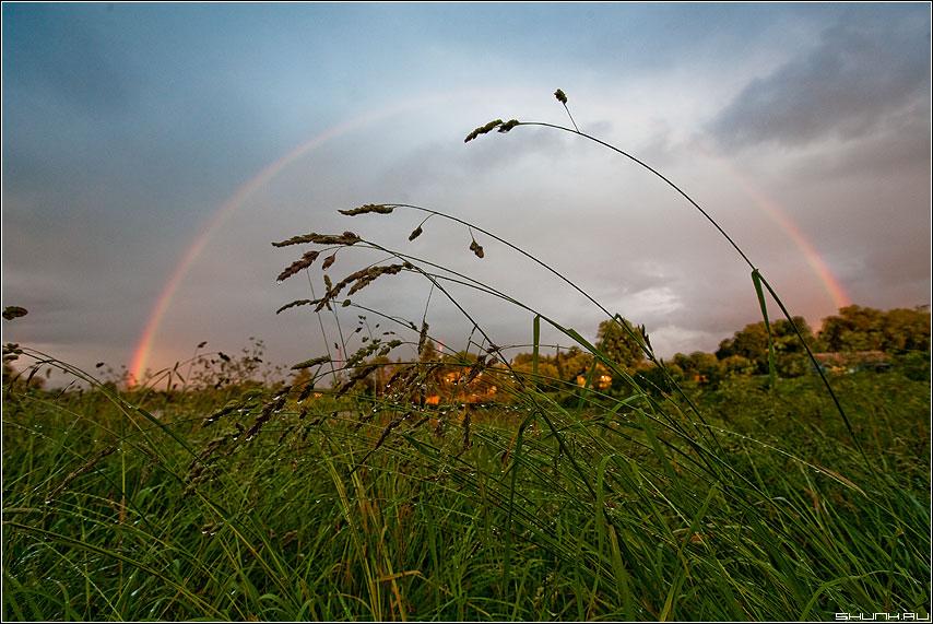 Радужные травинки - радуга травинки небо деревня шустиково трава капельки дождь небо лето июль фото фотосайт
