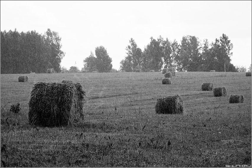 Про дождь и сено - дождь чёрнобелое сено катушки деревня поле лес фото фотосайт