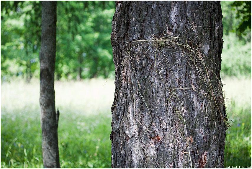 Сено - сено дерево лето июль сенокос деревня фото фотосайт