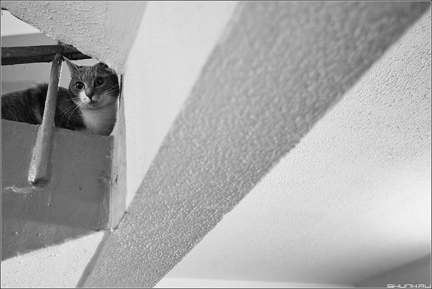 Кот и пространство - кот лестница подъезд чёрнобелое пространтсво фото фотосайт